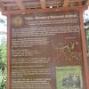 153_Thimphu Valley  Motithang Takin Preserve  Takin, Bhutan's National Animal  Unique, albeit strange, appareance