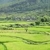 026_Paro Valley  Terraced paddy fields  A Bountiful Harvest