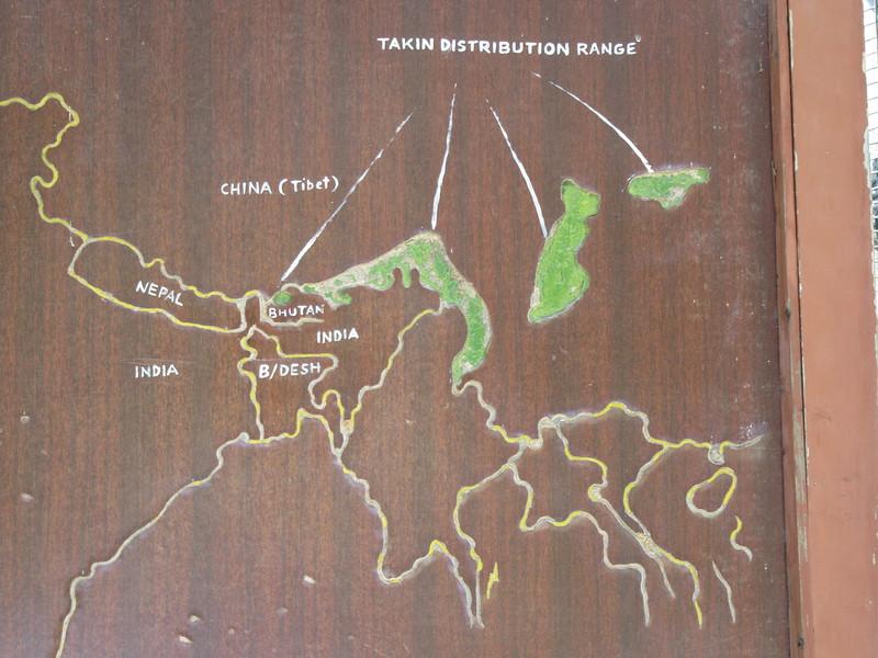 154_Thimphu Valley  Motithang Takin Preserve  Takin, Bhutan's National Animal  An oddball mammals