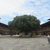 299_Punakha Dzong (Monastery-Fortress)