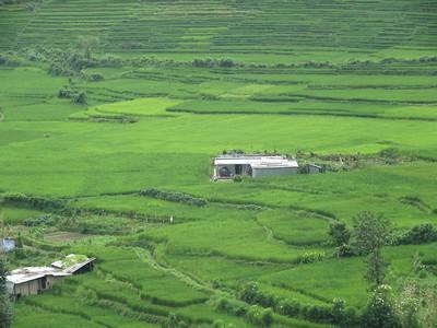 017_Bungamati  Terraced Rice Fields