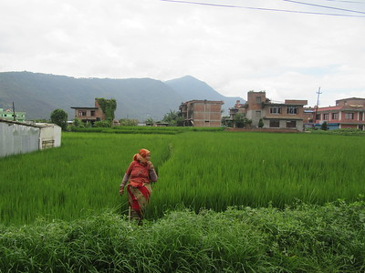 044_Bungamati  Terraced Rice Fields