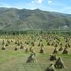 114_Hay Stacks near Mindroling Monastery
