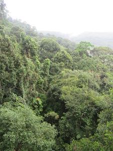 039_Poring Hot Springs  Canopy Walkway  The jungle floor