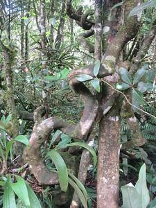026_Kinabalu National Park  Botanical Garden