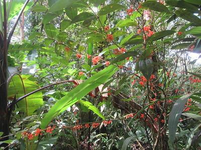 020_Kinabalu National Park  Botanical Garden  Prayer Plant Flower  2 of 2
