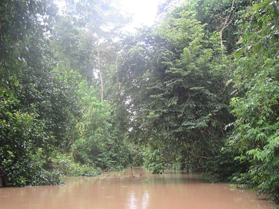 083_Sukau  From the Kinabutangan River to the Kelenanap Ox-bow Lake