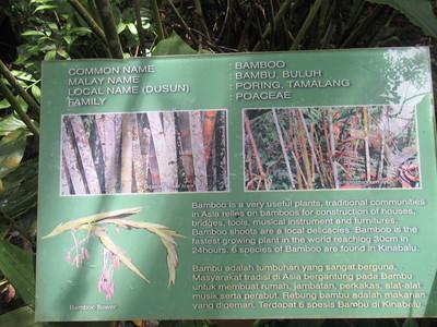 015_Kinabalu National Park  Botanical Garden  Bamboo  1 of 2