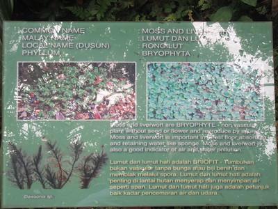 028_Kinabalu National Park  Botanical Garden  Moss and Liverwort