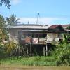 075_Sandakan to Sukau  The Lower Kinabutangan River Sanctuary