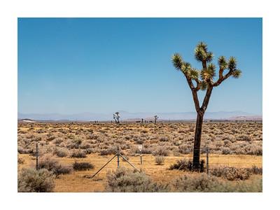 California_120719_DSB0508