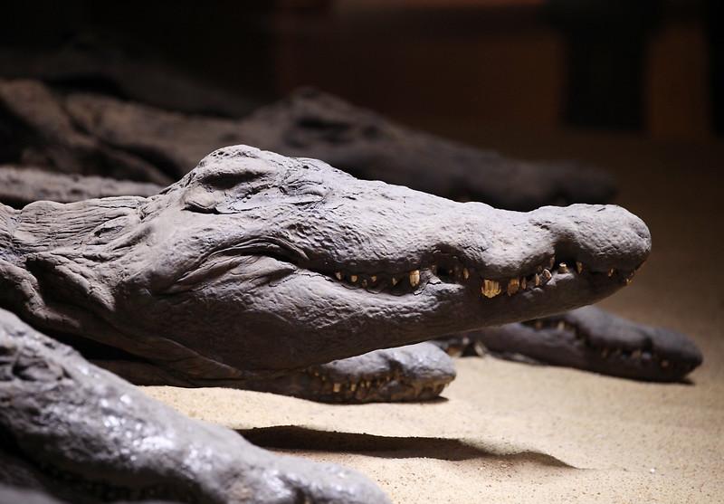 Mummified crocodiles, Kom Ombo temple