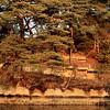 Evening sun, Matsushima