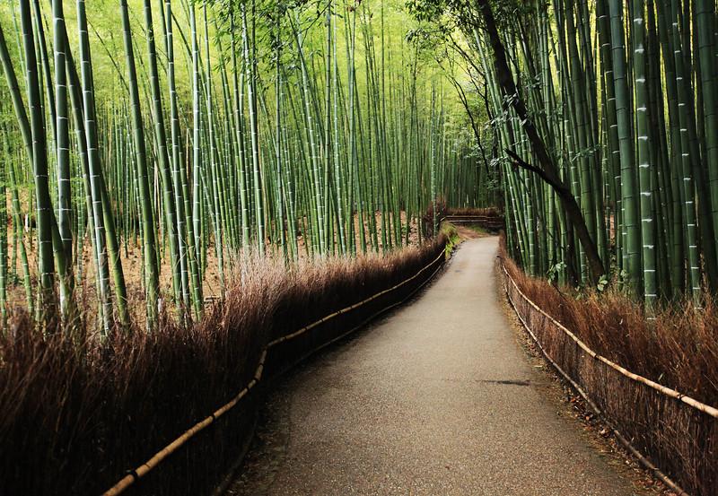 Tenryu-ji bamboo forest