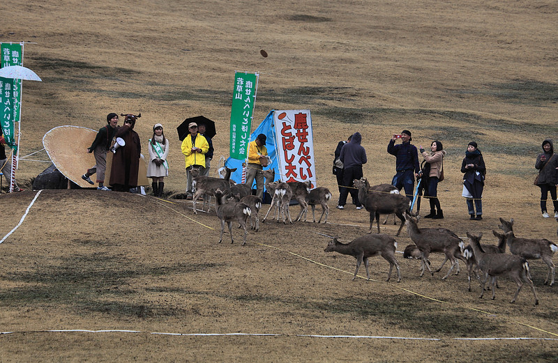 Annual Nara deer-biscuit-discus competition