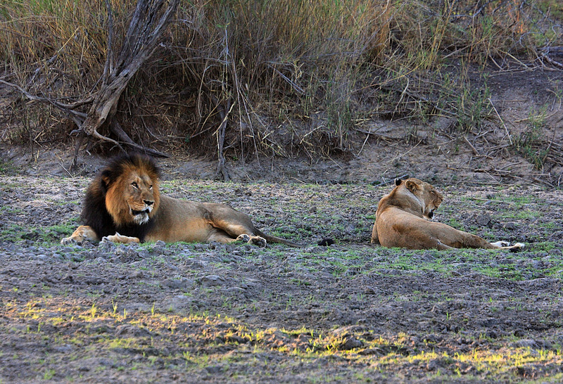 Evening game drive, Private Game Reserve