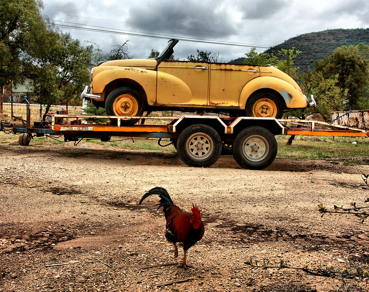 A cock and a beetle