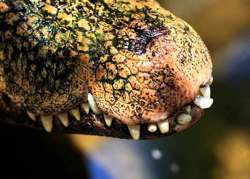 Reptile sanctuary