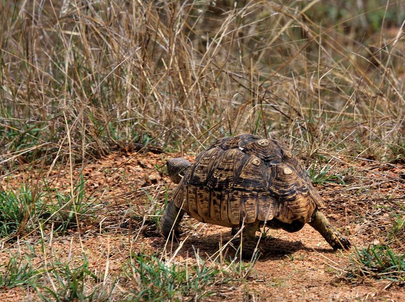Leaving Kruger National Park