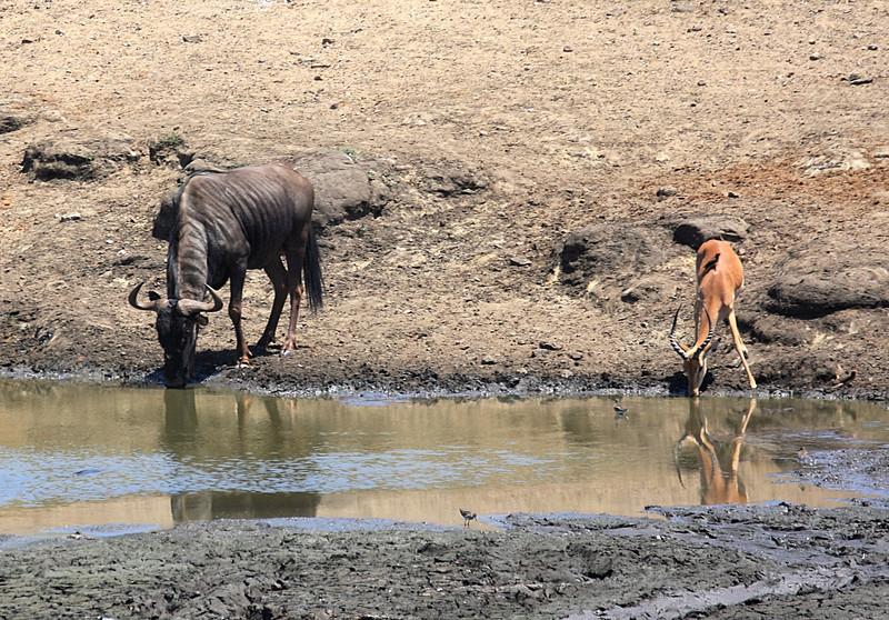 Entering Kruger National Park
