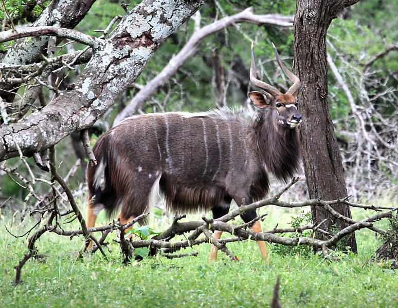 Mkuzi Game Reserve