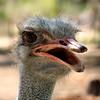 Ostrich. Reptile sanctuary