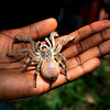 Reptile sanctuary. There's a £50,000 fine if you kill one of these spiders