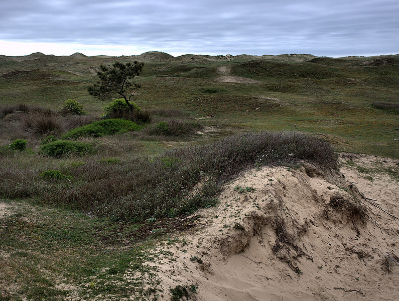 Dunes / Nature reserve