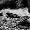 River Alta