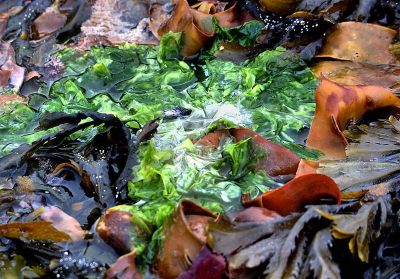Seaweed soup, Penmarc'h