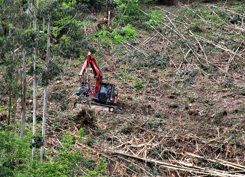 Logging, near Avilles