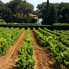 A Vinyard, France