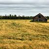 D116. A Field, Finland