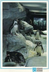 0769_Genova_Acquarium_Humbolt_Penguin
