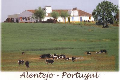 523_Plaines_de_L_Alentejo