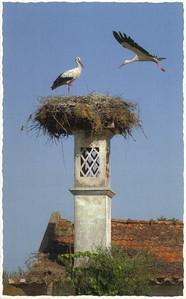 019_Portugal_Storks_Nest
