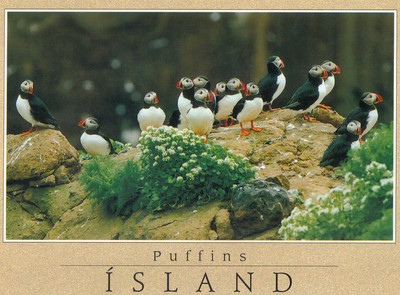 013_Puffins_are_migratory_birds_that_arrive_in_Iceland_in_April