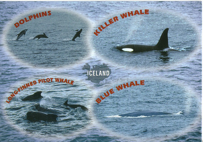 008_Iceland_Paradise_for_Whale_watchers_various_species