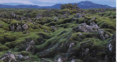 028_Moss_covered_lava_A_common_Icelandic_landscape