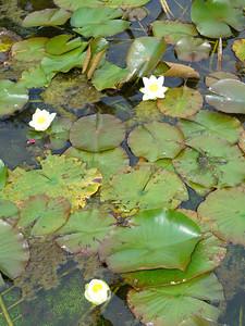 022_Lago_Maggiore_Verbania_Villa_Taranto_Gardens