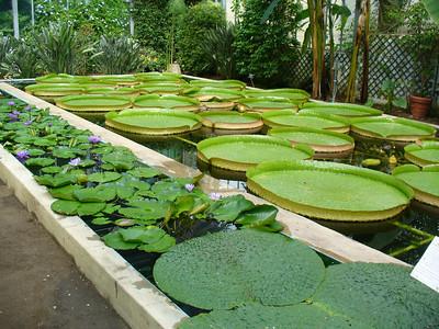 011_LM_Verbania_Villa_Taranto_Gardens_Victoria_Amazzonica
