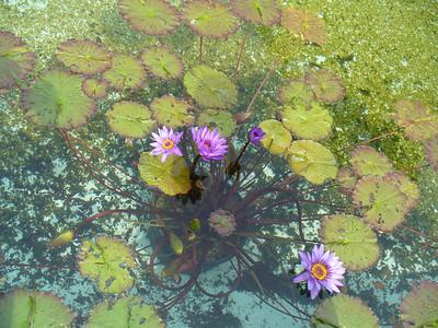 023_Lago_Maggiore_Verbania_Villa_Taranto_Gardens