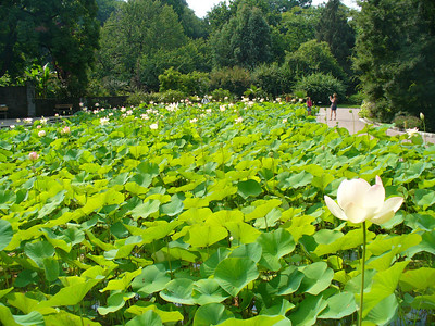 021_Lago_Maggiore_Verbania_Villa_Taranto_Gardens