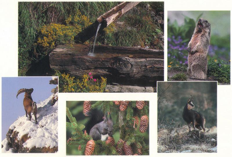 019_Wildlife