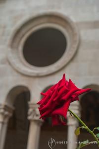cloister flower #2