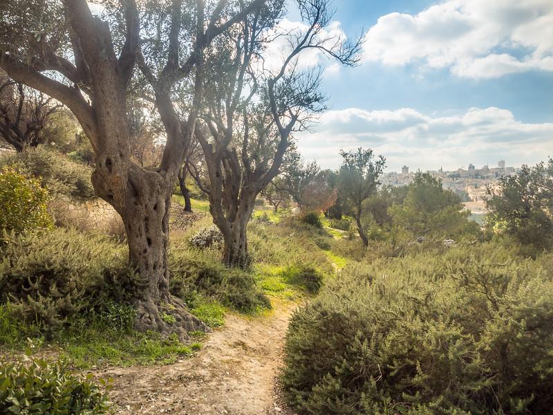Above Gethsemane, Jerusalem