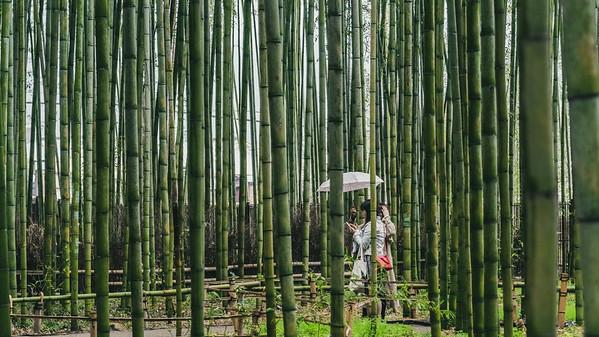 Kyoto_210319_DSB0706