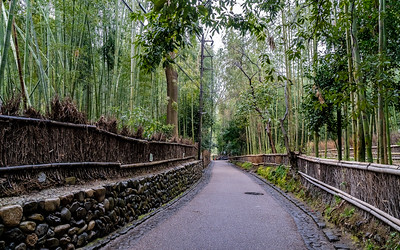 Kyoto_210319_DSB0437
