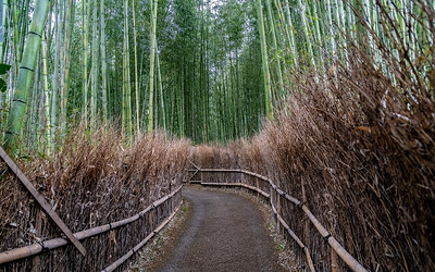 Kyoto_210319_DSB0432