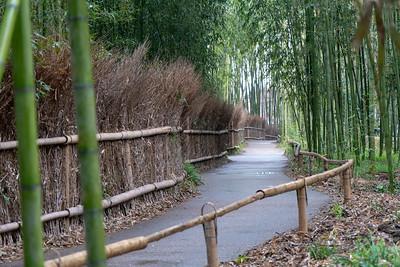 Kyoto_210319_DSB0465